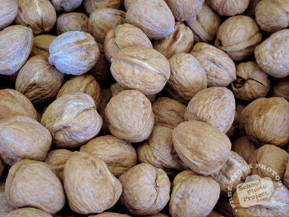 nut, walnut, walnuts, walnut in shell, walnut photo, nuts picture, free photo, free download, stock photos, royalty-free image