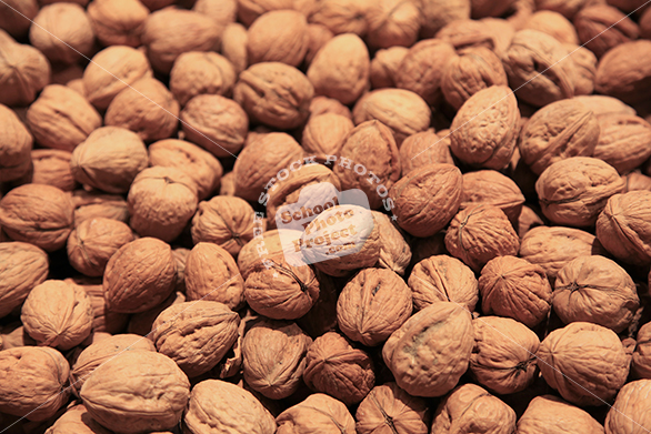 fresh walnut, walnuts, walnut in shell, free stock photo, free image, royalty-free image