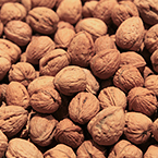 walnut, walnuts, nuts picture, free stock photo, free image, royalty-free image