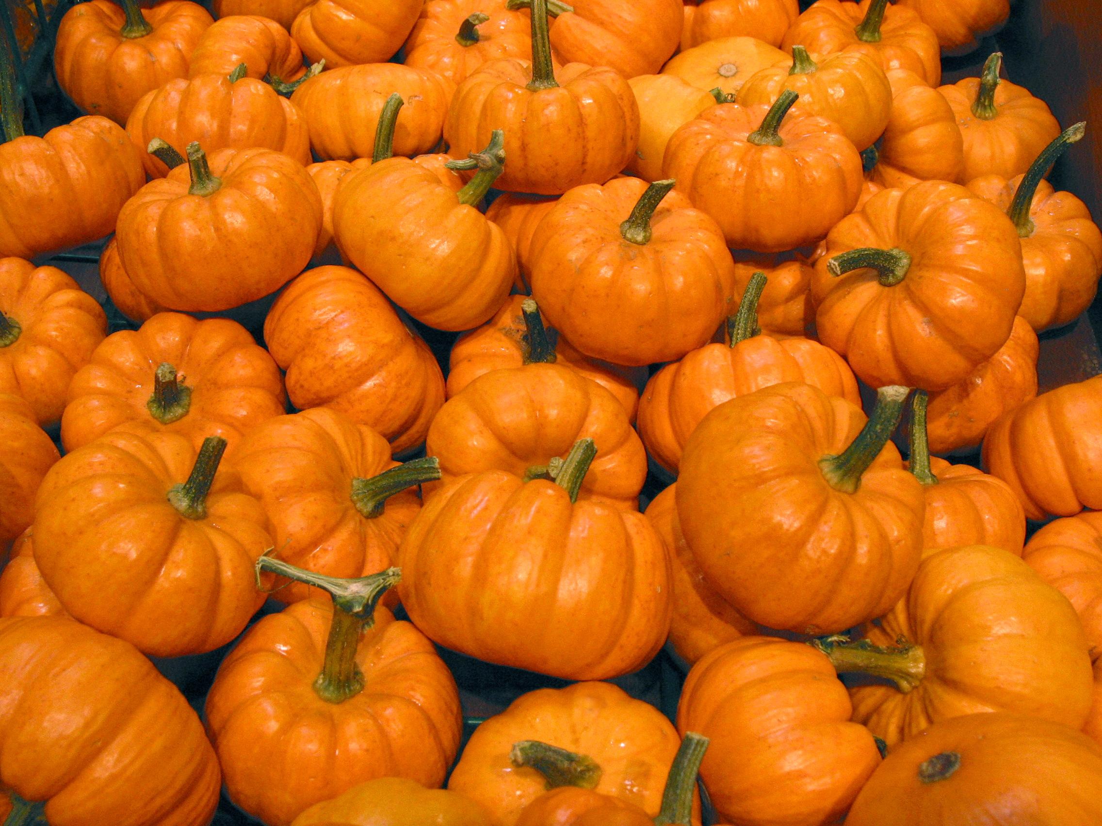 Pumpkin  Free Stock Photo  Image  Picture  Halloween Mini