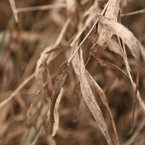 hay, bushes, grass, legumes, dried hay, dried grass, dried bushes, hay texture, hay photo, grass photo, grass picture, nature photo, free stock photo, free picture, stock photography, royalty-free image