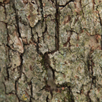 bark, tree bark, tree skin, bark texture, bark pattern, tree bark texture, bark photo, nature photo, free photo, stock photos, royalty-free image, free download