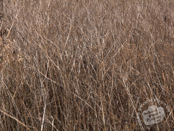 hay, bushes, grass, dried hay, dried grass, dried bushes, hay texture, hay photo, grass photo, grass picture, nature photo, free stock photo, free picture, stock photography, royalty-free image