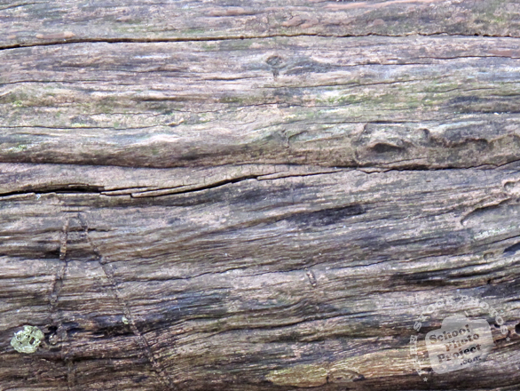 bark, tree bark, tree skin, old bark, bark texture, bark pattern, tree bark texture, bark photo, nature photo, free stock photo, free picture, stock photography, royalty-free image