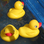 rubber ducks, yellow rubber duck, toy, toy photo, pool, photo, free photo, stock photos, royalty-free image