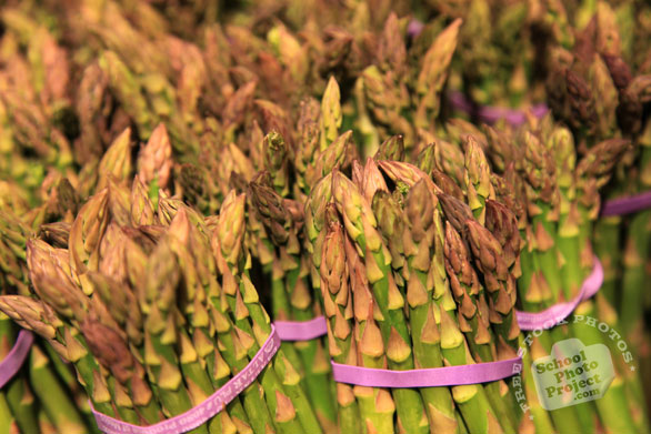 asparagus, vegetable photos, veggie, free stock photo, royalty-free image