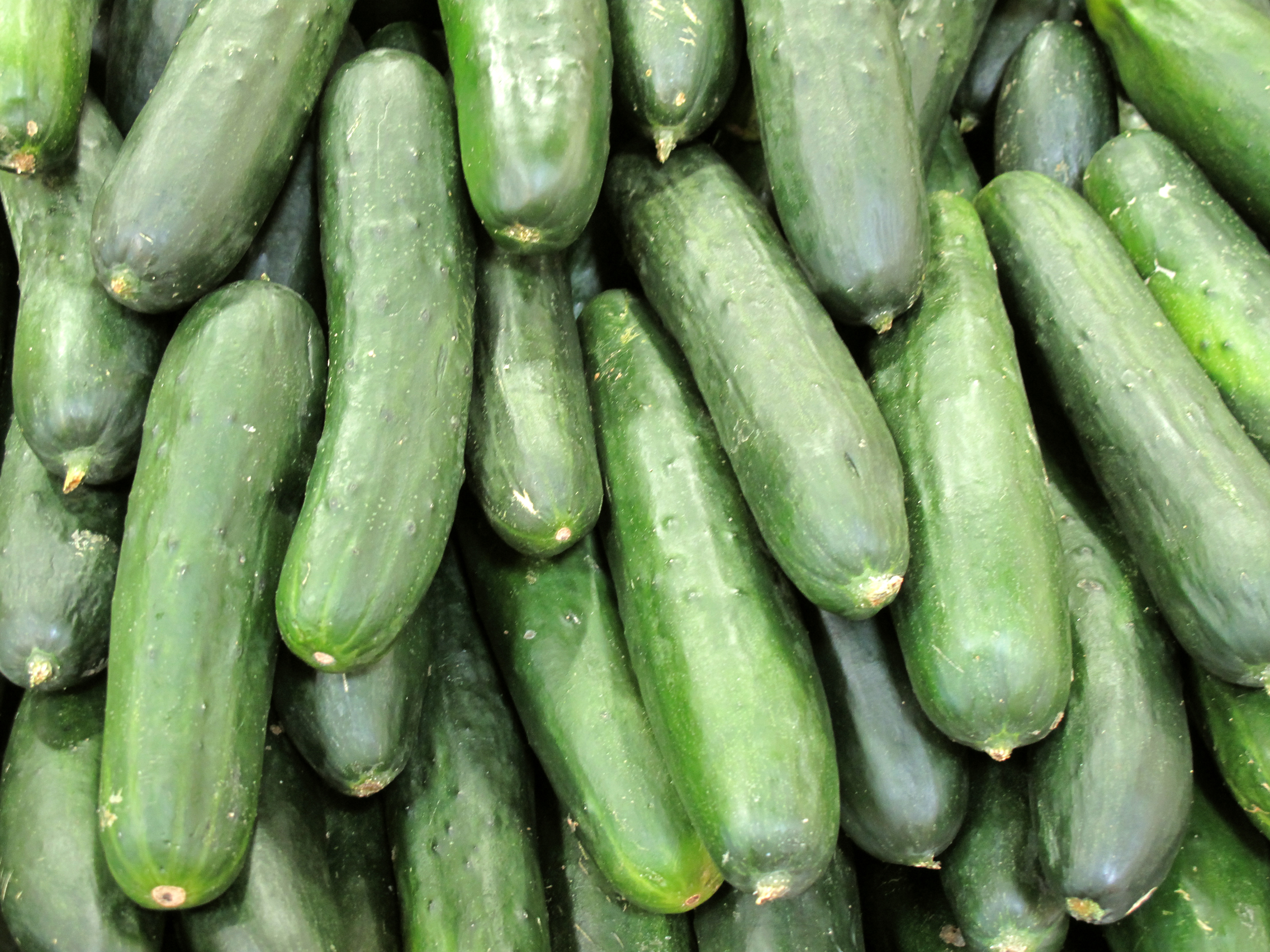 cucumber free stock photo image picture cucumbers royalty