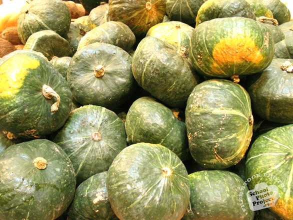 kabocha, squash, vegetable, fresh veggie, vegetable photos, photo, free photo, stock photos, royalty-free image