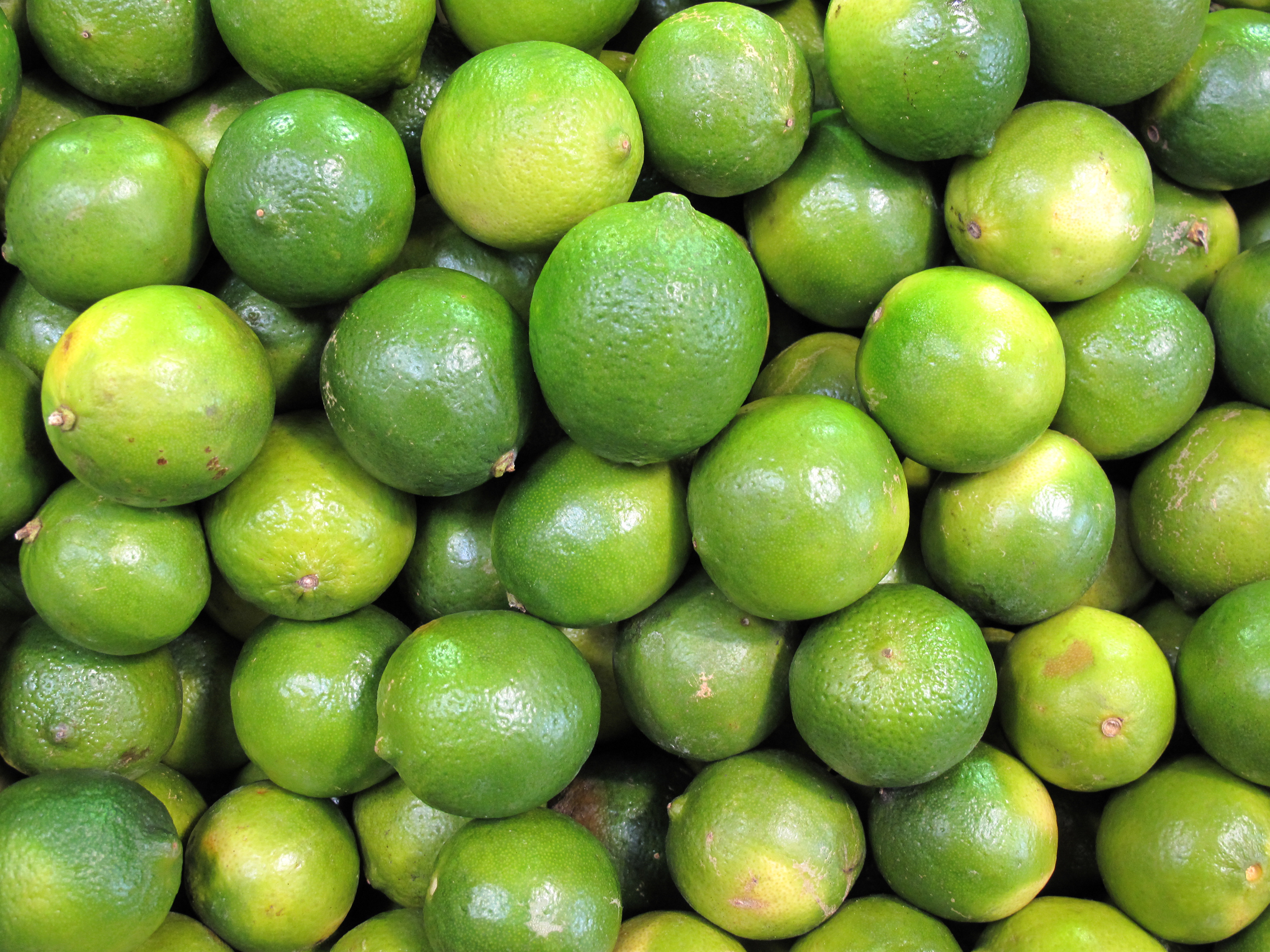 Lime, FREE Stock Photo, Image, Picture: Fresh Limes ...