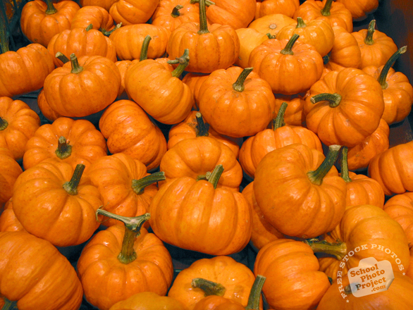 pumpkin, pumpkin photo, mini pumpkins, vegetable, fresh veggie, vegetable photo, free stock photo, free picture, stock photography, royalty-free image