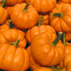 pumpkin, mini pumpkins, vegetable, fresh veggie, vegetable photo, free stock photo, free picture, stock photography, royalty-free image