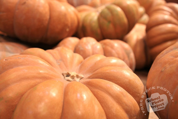 rouge vif dEtampes, Cinderella pumpkin, flat pumpkin, vegetable photos, veggie, free stock photo, royalty-free image