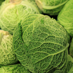 savoy cabbage, vegetable photos, veggie, free stock photo, royalty-free image