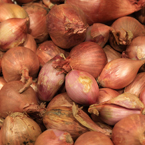 shallot onion, vegetable photos, veggie, free stock photo, royalty-free image