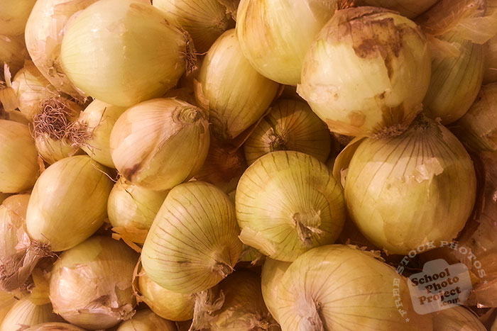 Spanish onion, onion bulb, veggie, vegetable photo, free stock photo, free picture, royalty-free image