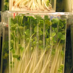 sprouts, lentil sprouts, vegetable, fresh veggie, vegetable photo, free stock photo, free picture, stock photography, royalty-free image