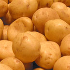 potato, white potato, vegetable, fresh veggie, vegetable photo, free stock photo, free picture, stock photography, royalty-free image