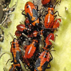 bug's colony, bugs, insects, photo, free photo, stock photos, royalty-free image