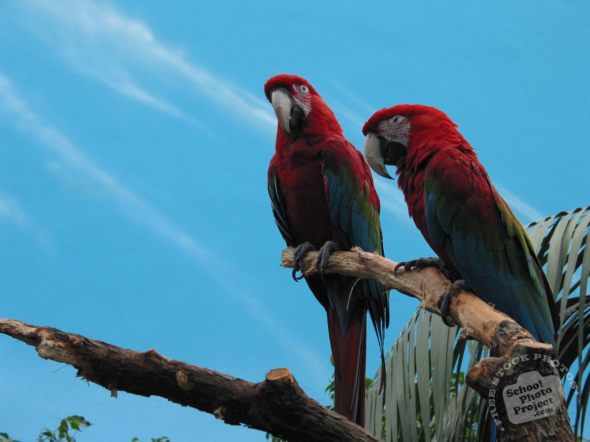 Parrots Free Stock Photo Image Picture Parrot Bird