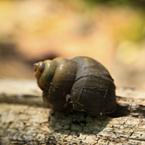 snail, shell, free animal stock photo, royalty-free image