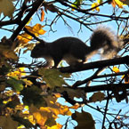 squirrel, animal, wild animal, tree, photo, free photo, stock photos, royalty-free image