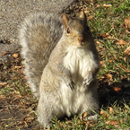 squirrel, animal, wild animal, grass, photo, free photo, stock photos, royalty-free image