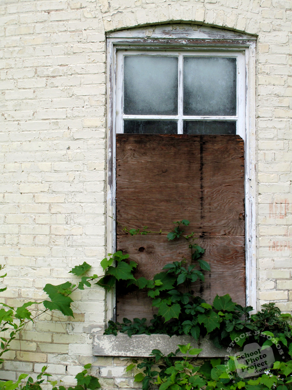 window, damaged window, sealed window, abandoned building, vine, architecture photo, building, free stock photos, free images, royalty-free image