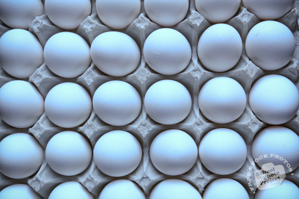 chicken egg, white egg, eggs in carton, free foto, free photo, picture, image, free images download, stock photography, stock images, royalty-free image