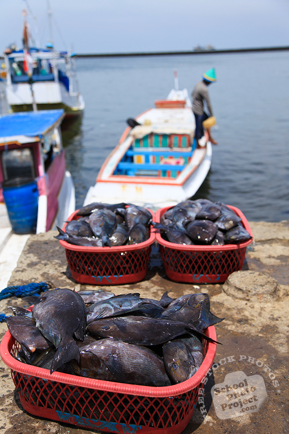 fresh catches, fresh fish, fish market, fisherman, free stock photo, picture, free images download, stock photography, royalty-free image