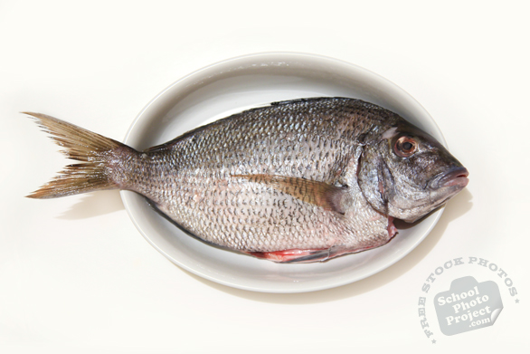 porgy fish, porgie, saltwater fish, prepared seafood, free stock photo, picture, free images download, stock photography, royalty-free image