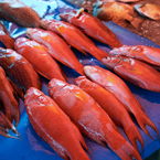 red coral trout, saltwater fish, fish stall, seafood market, free stock photo, picture, free images download, stock photography, royalty-free image