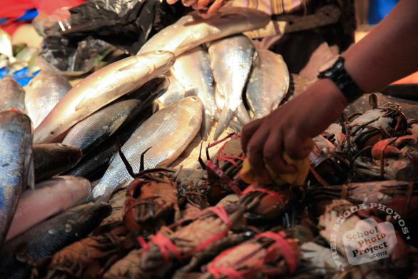 milkfish, crabs, fresh fish, fishmonger, fish stall, seafood market, free stock photo, picture, free images download, stock photography, royalty-free image