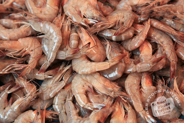 shrimps, prawns, crustacean, seafood, free stock photo, picture, free images download, stock photography, royalty-free image