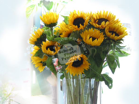 sunflower, sunflowers in a vase photo, fresh sunflowers, decorative flower, blooming flowers, stock photos, stock image, stock photography, royalty-free image