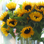sunflower, sunflower photo, sunflower picture, sunflower image, flower, plant, décor, photo, free photo, stock photos, royalty-free image