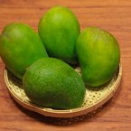 mangos, green mangos, mango photos, tropical fruit photos, free foto, free photo, stock photos, picture, image, free images download, stock photography, stock images, royalty-free image