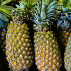 pineapples, pineapple photos, tropical fruit photos, free foto, free photo, stock photos, picture, image, free images download, stock photography, stock images, royalty-free image