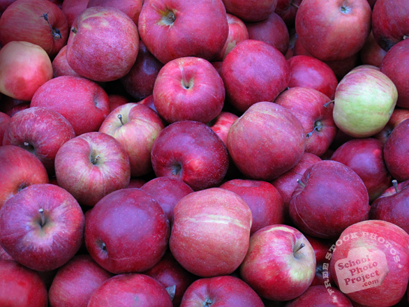 apple, red apple photo, picture of red apples, fruit photo, free images, stock photos, stock images, royalty-free image