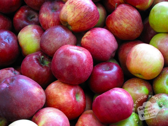 apple, red apples, picture of apples, fruit photo, free images, stock photos, stock images, royalty-free image