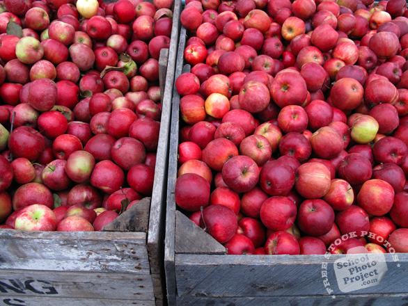 apple, apple stall, picture of red apples, fruit photo, free images, stock photos, stock images, royalty-free image