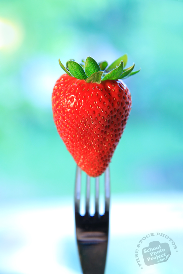 strawberry, strawberry photos, picture of strawberry on fork, fruit photo, utensil fork, free stock photo, free picture, stock photography, stock images, royalty-free image