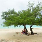 bather, tree, sandy beach, seaside, peaceful, tranquility, serenity, tropical island, panorama, nature photo, free stock photo, free picture, stock photography, royalty-free image