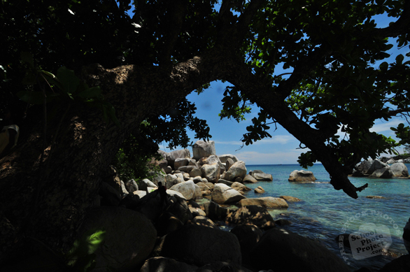 tree, tropical tree, shady peaceful island, stone, big rocks, rock sediments, tropical islands, beach, seaside, seascape, sunny day, beautiful panorama, landscape, nature photo, desktop wallpaper, free stock photo, free images, stock photography, royalty-free image
