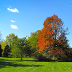 oak, maple, Canada trees, red tree, meadow, colorful autumn leaves, fall season foliage, sunny sky, panorama, nature photo, free stock photo, free picture, stock photography, royalty-free image