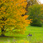 oak, maple, Canada trees, picnic, meadow, colorful autumn leaves, fall season foliage, sunny sky, panorama, nature photo, free stock photo, free picture, stock photography, royalty-free image
