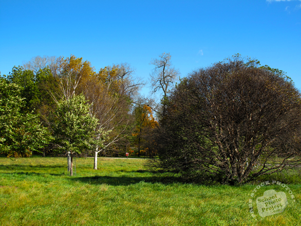 orchard, oak tree, maple, meadow, sunny sky, colorful autumn leaves, fall season foliage, panorama, nature photo, free stock photo, free picture, stock photography, royalty-free image