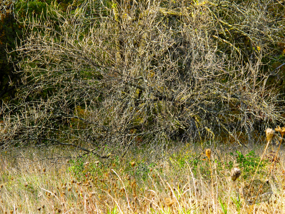 grove, thicket, shrub, brushwood, weeds, bare trees, meadow, fall season foliage, panorama, nature photo, free stock photo, free picture, stock photography, royalty-free image