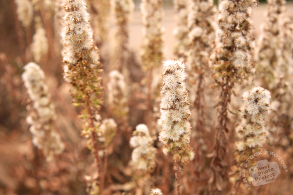 wild bushes, wild flowers, dried plants, fall season, autumn, prairie, cattails, typha, nature photo, free stock photo, free picture, stock photography, royalty-free image