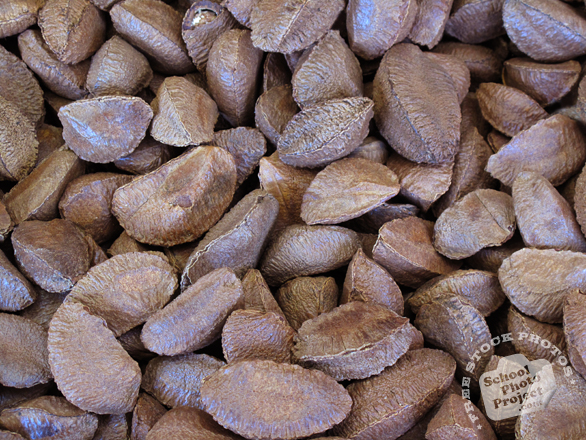 brazilian nuts, brazil nut, nut in shell photo, nuts picture, free photo, free download, stock photos, royalty-free image