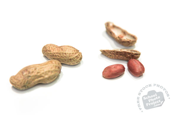 dried peanuts, peanut shell, nuts, free stock photo, free image, royalty-free image